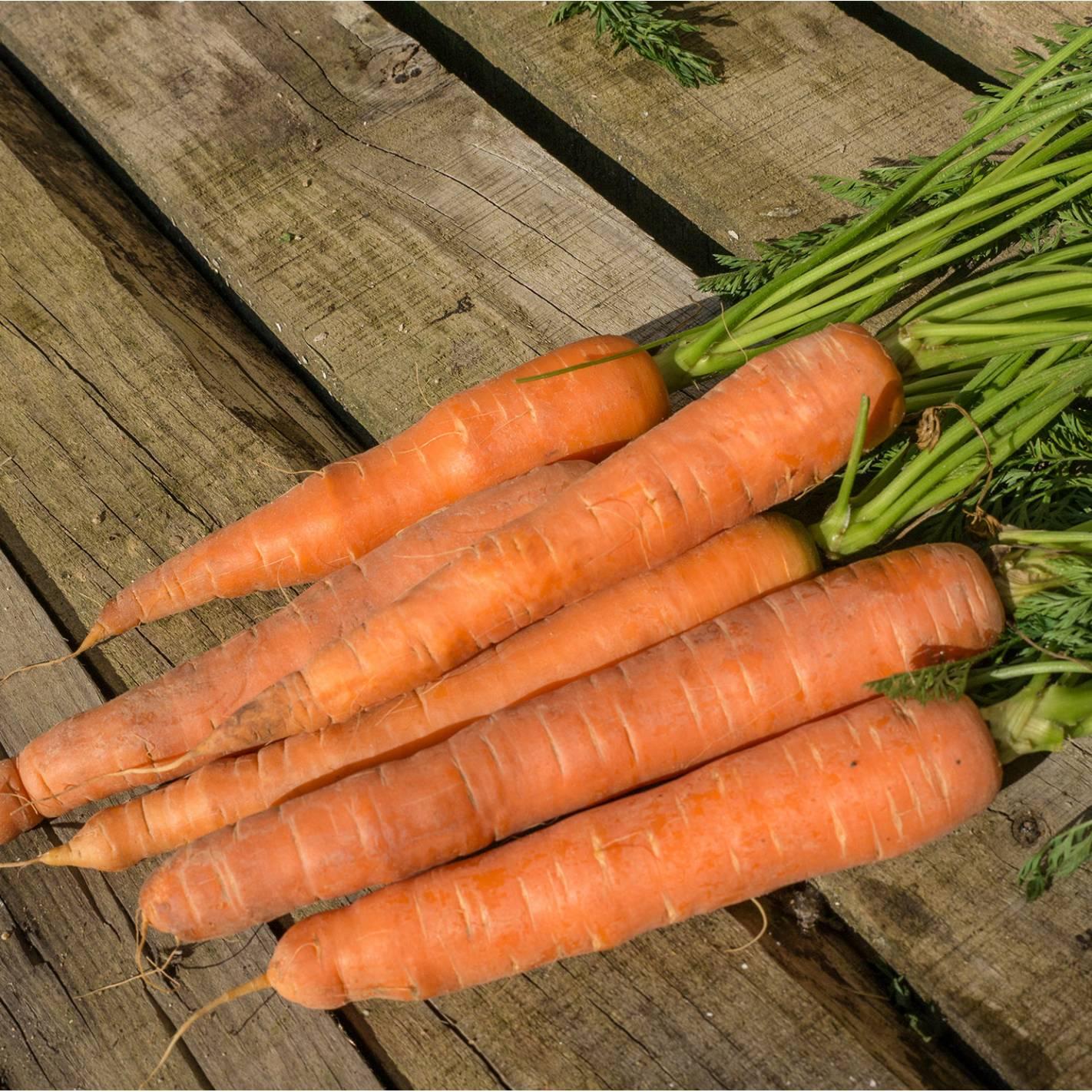 Cenoura 'Dolciva'
