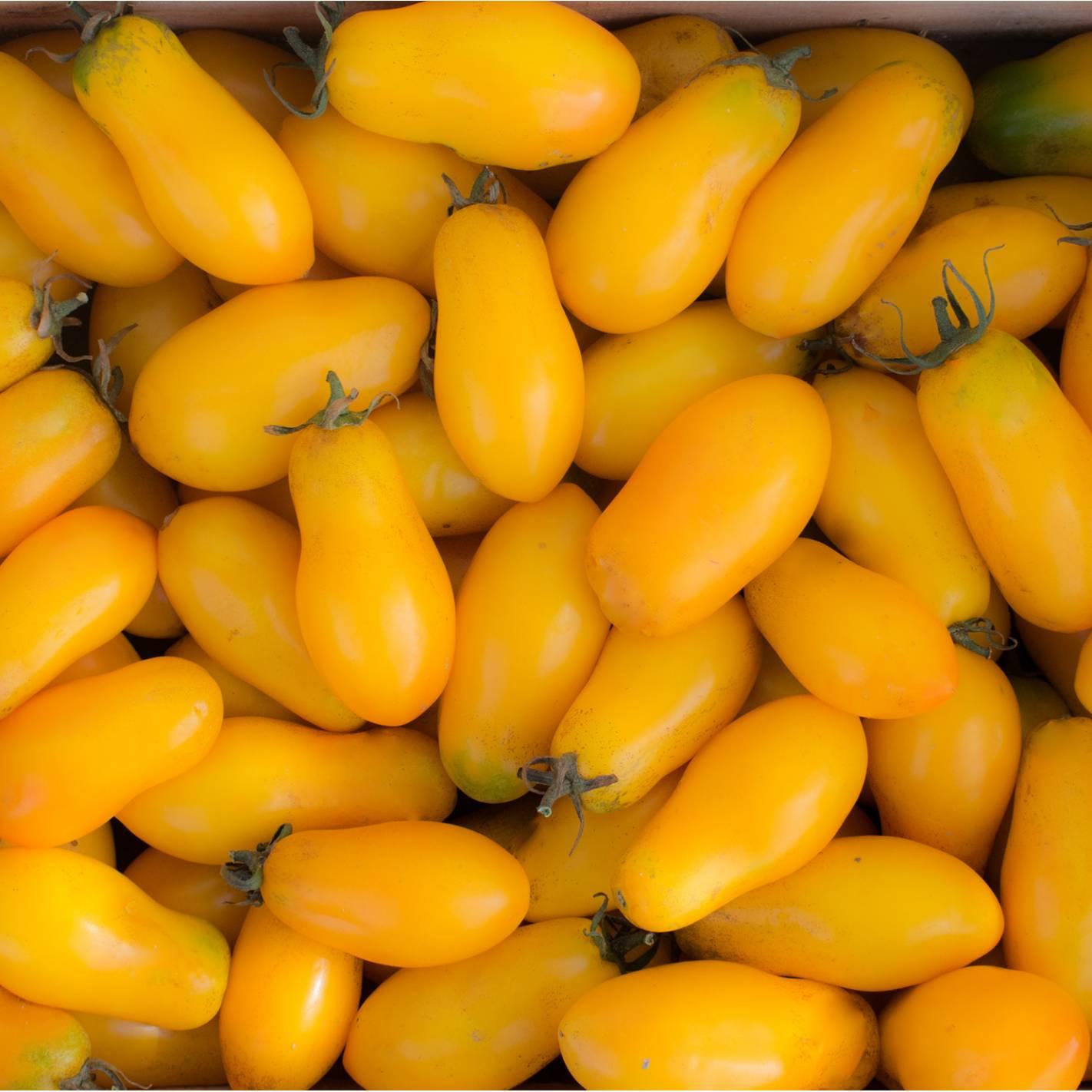 Tomate 'Banana Legs'