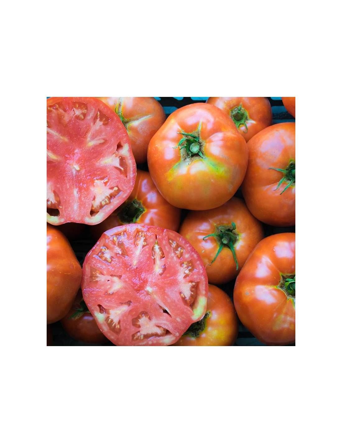 Tomate 'Ace 55 VF'