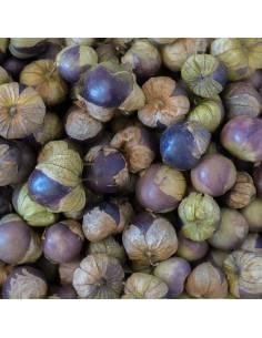 Fisália Purple Tomatillo organic seeds