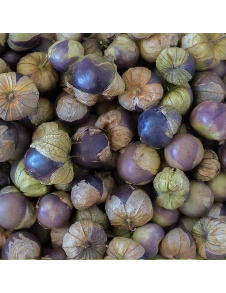Fisália Tomatillo Roxo sementes biológicas