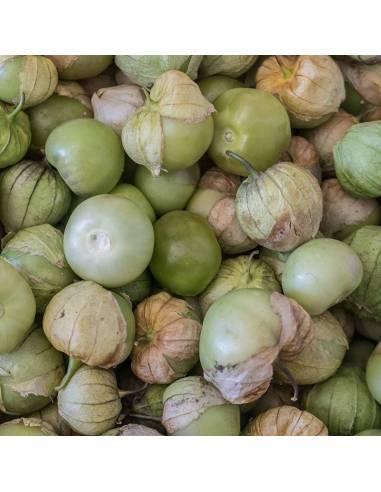 Fisália Tomatillo Verde sementes biológicas