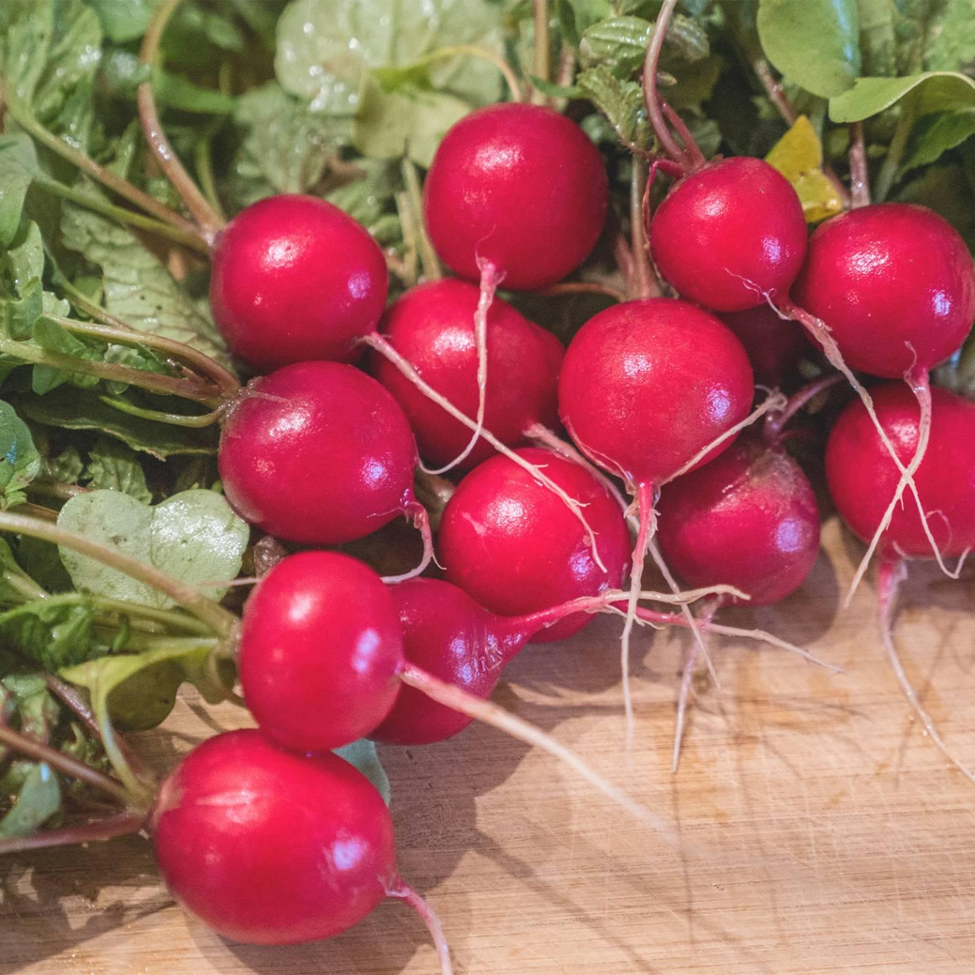 Rabanete 'Cherry Belle'