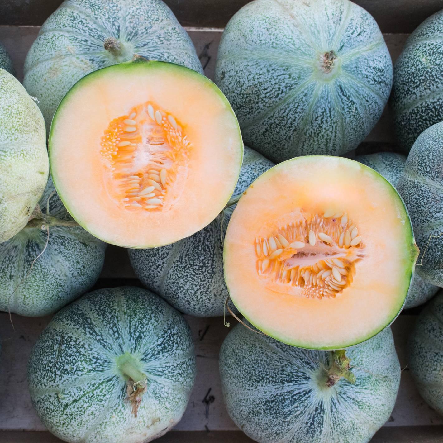 Meloa 'Petit Gris De Rennes'