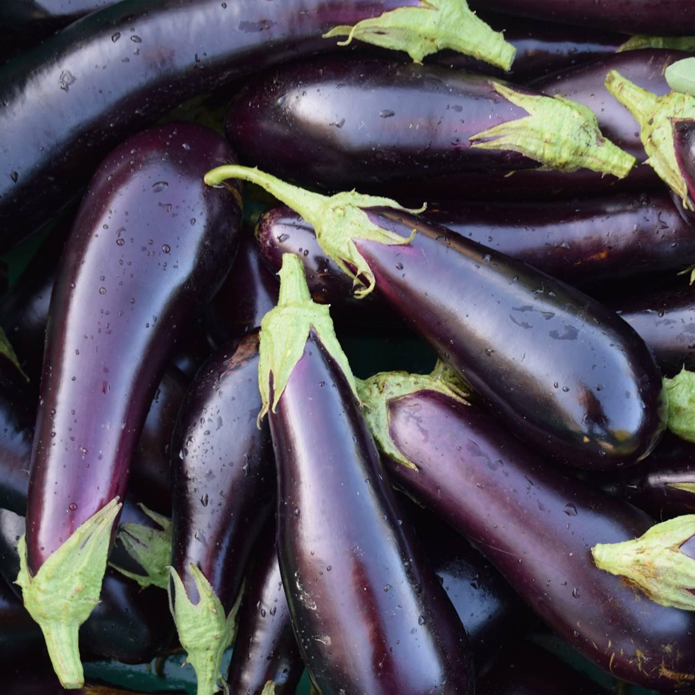 Beringela 'Violetta Lunga 2'