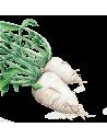 Nabo Gandra sementes biológicas