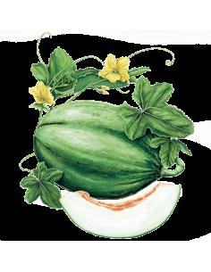 Melon Manuel António organic seeds