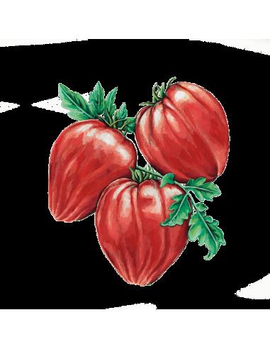 Tomate Coração de Boi sementes biológicas