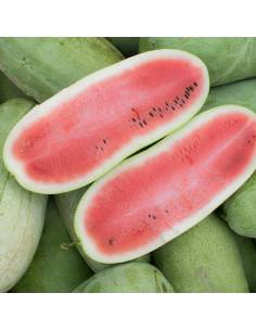 Watermelon Charleston Gray organic seeds