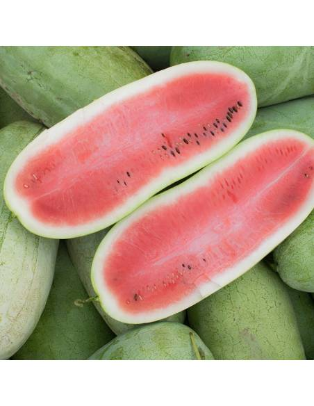 Watermelon Charleston Gray organic seeds
