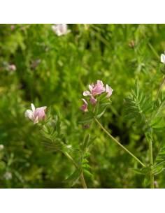 Serradela Bio 1Kg sementes biológicas