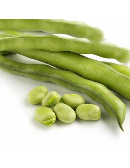 Broad bean Super Aguadulce organic seeds