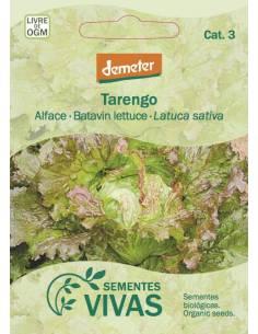 Lettuce Tarengo organic seeds