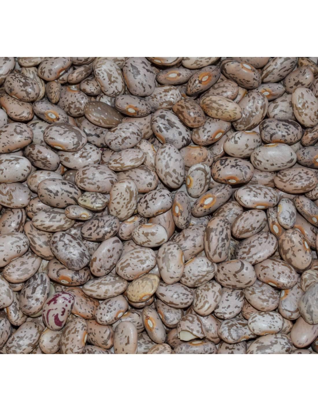 Feijão grão seco 'Catarino'