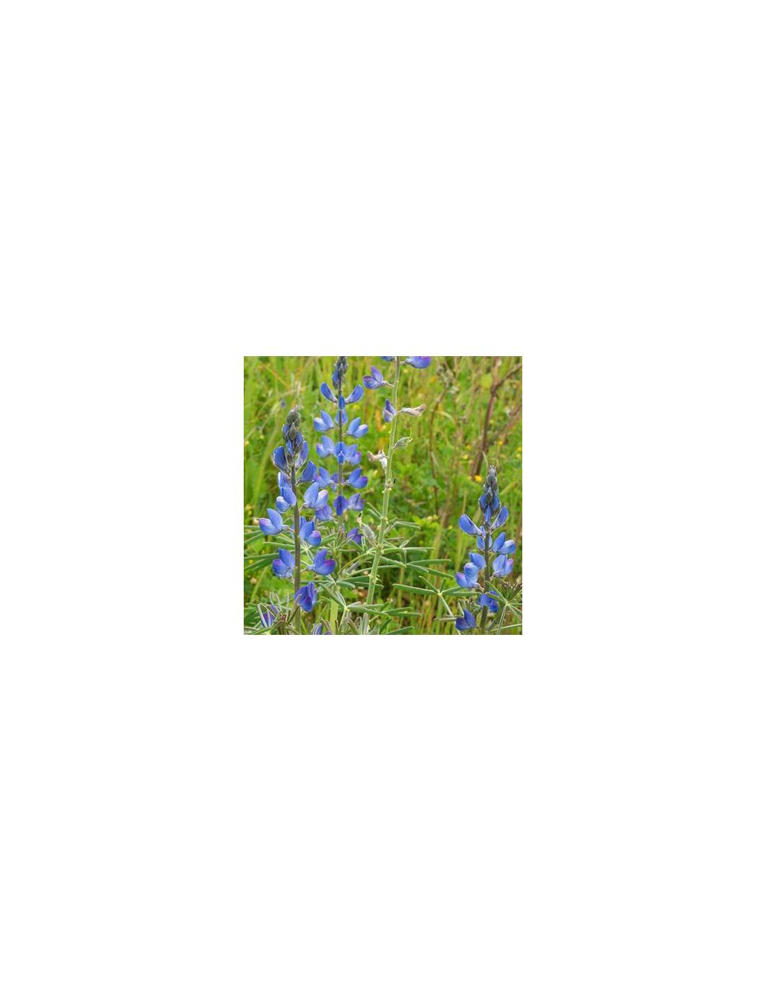 Tremocilha Azul