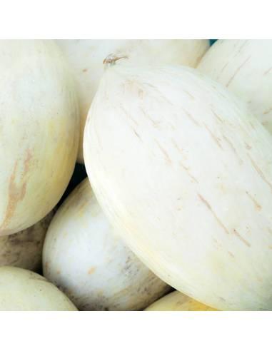 Melão Branco do Ribatejo sementes biológicas
