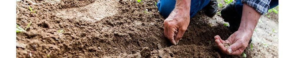 Para semear este mês | Comprar Sementes Biológicas | Sementes Vivas