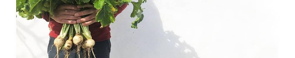 Nabos | Comprar Sementes Biológicas | Sementes Vivas