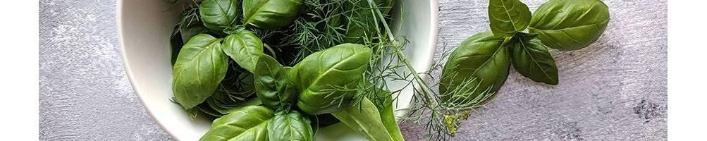 Aromáticas | Comprar Sementes Biológicas | Sementes Vivas